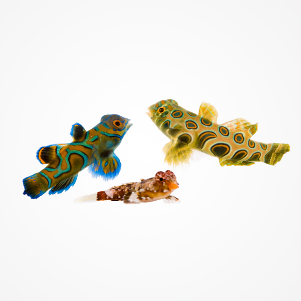 acvarii-pentru-copii